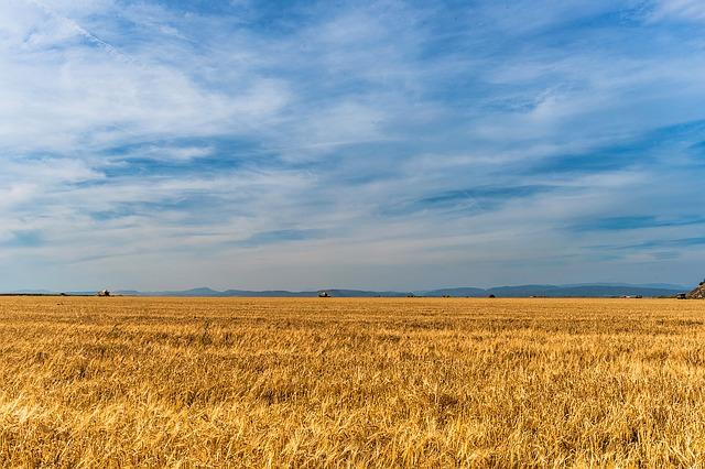 Masz sceptyczne podejście co do chemicznego zwalczania chwastów w kukurydzy?