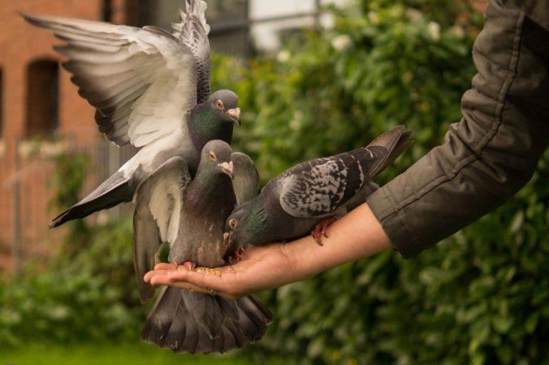 Zabezpieczenie balkonu przed zwierzętami